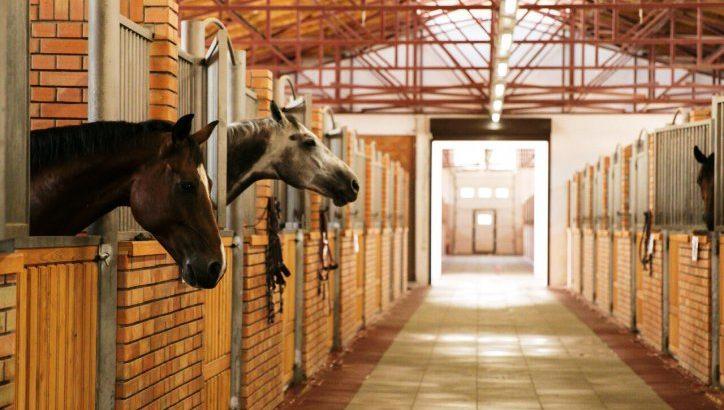 Земельный участок в ТиНАО могут отдать под постройку конно-спортивного клуба
