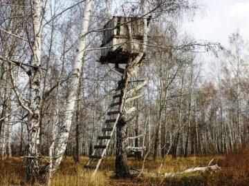 Браконьерскую «засидку» для охоты на лосей и косулю демонтируют в ТиНАО. Лабаз