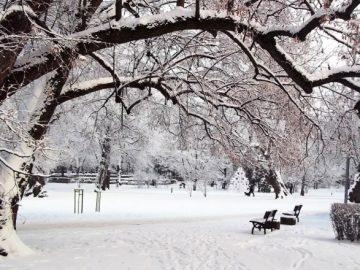 На сегодняшний день в Новой Москве создано 20 парков