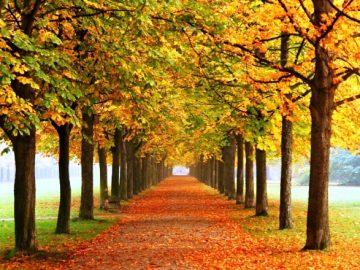Семь парков и зон отдыха создаются сейчас в ТиНАО